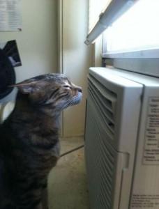 cat AC